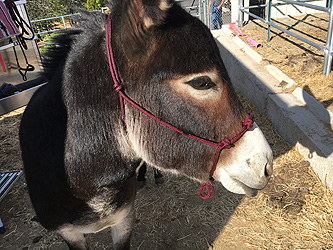Testimonials | Donkey Whisperer Farm |